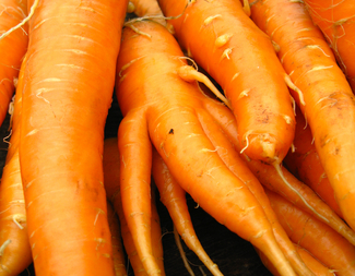 Search carrots