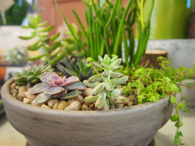 Wine & Design: Succulent Bowl Garden