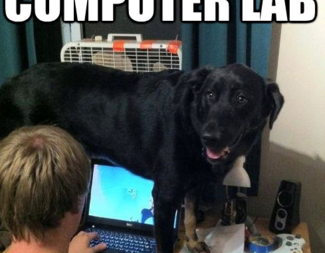 Search funny pictures dog desk computer lab
