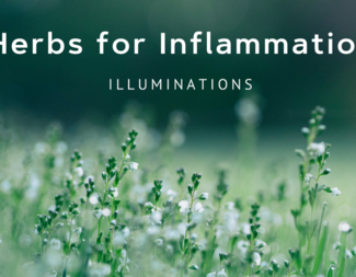 Search herbs for inflammation
