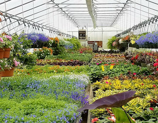 Search forever green coralville iowa garden center header image