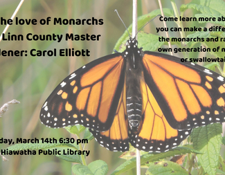 Search for the love of monarchs