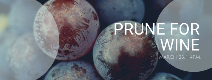 Prune for Wine