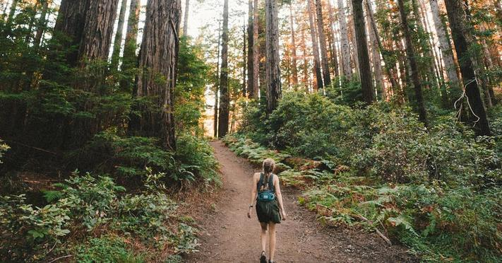 Forest Bathing: Foraging WIld Edibles