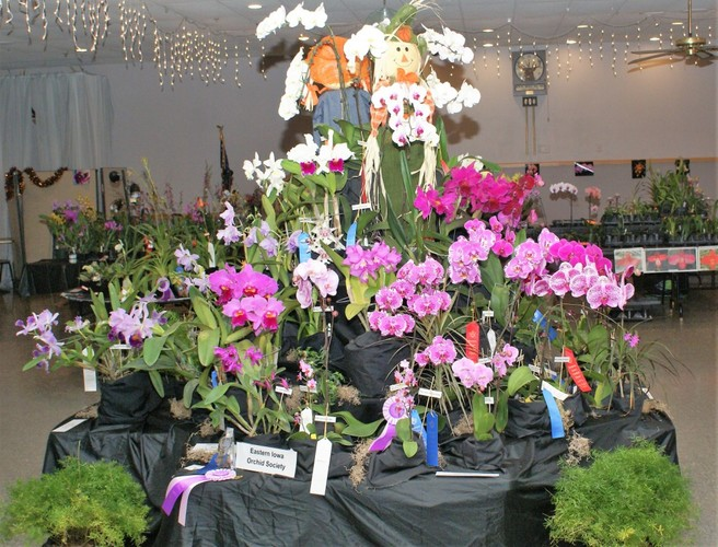 Orchids Are A Scream 2 !   Orchid Show and Sale