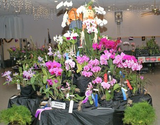 Search eastern iowa orchid society display 2019